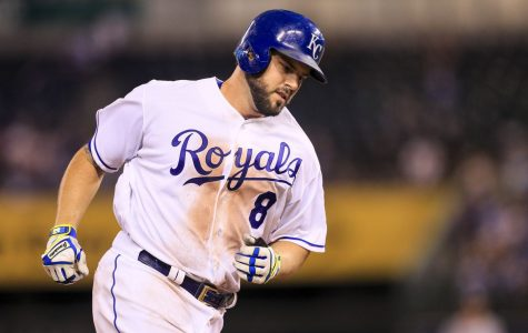 Moose Back with Royals