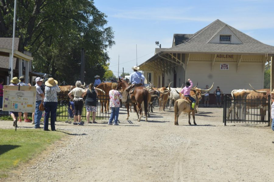 Cattle Drive- Loading Up